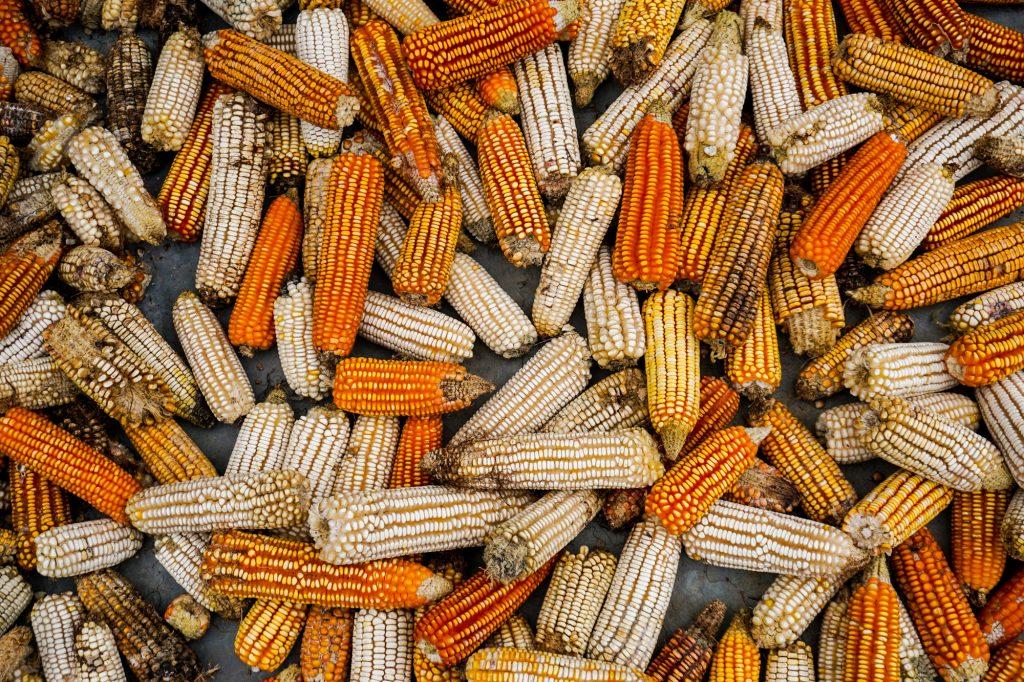 Plateselector - Maiz